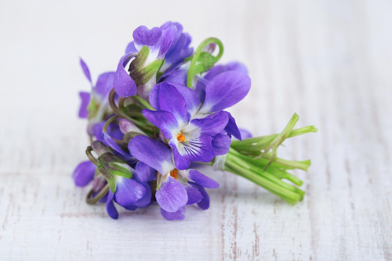 Violet flower oil