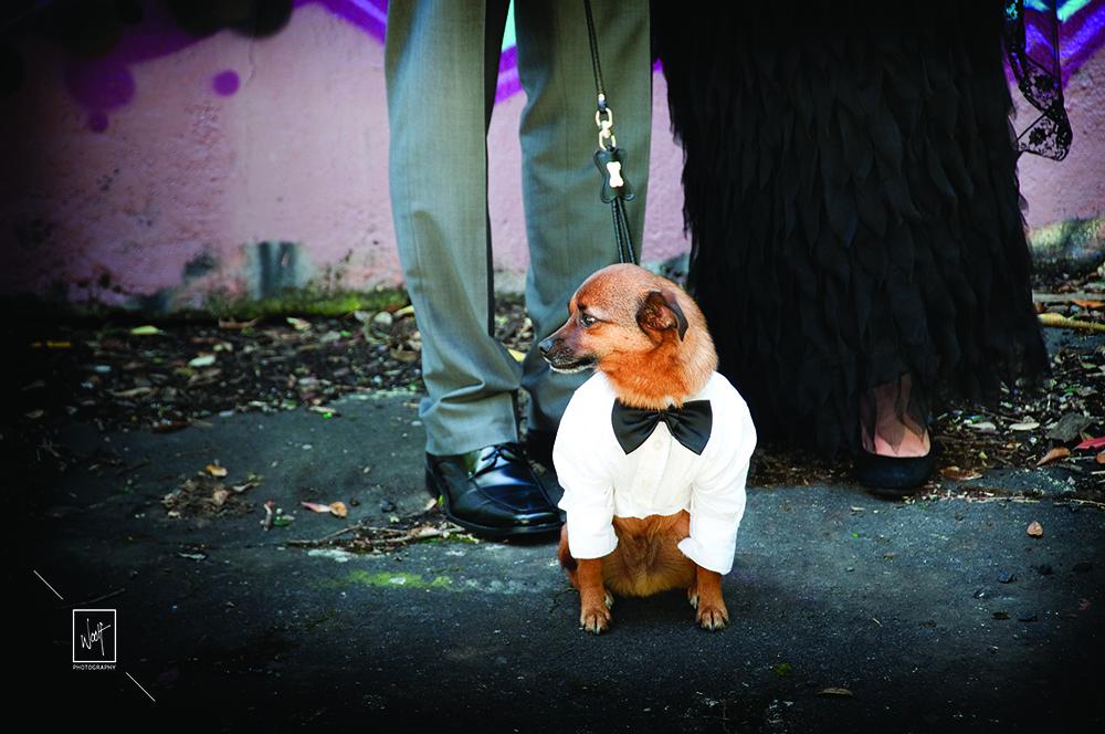Wedding pets photos