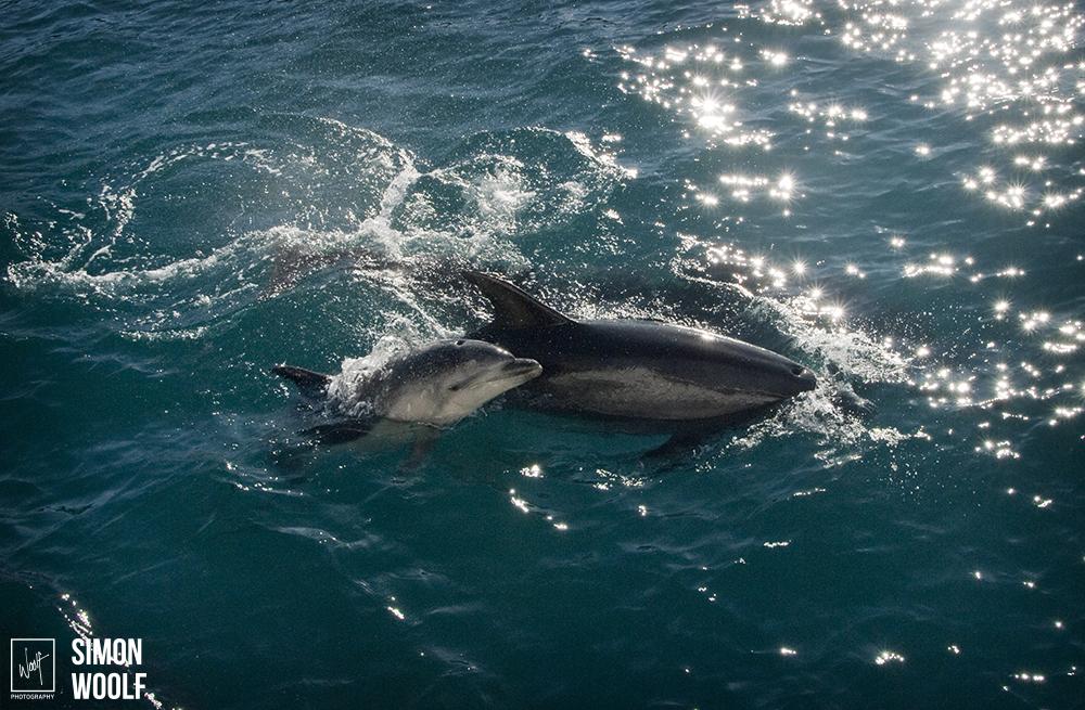 Baby Dolphin_ESC8388.jpg