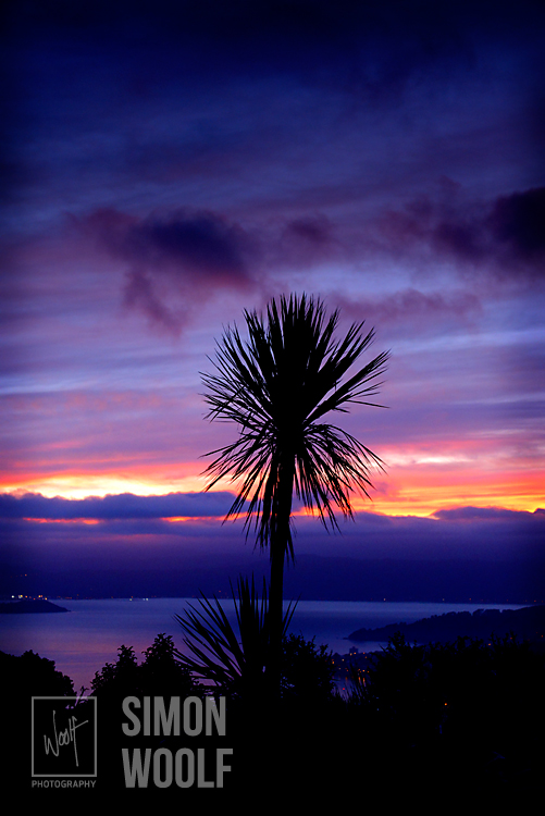 #3136, Bruce and Simon's Cabbage Tree