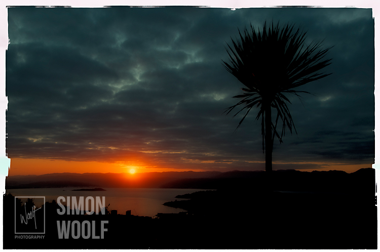 #3149, The New Cabbage Tree and First Light
