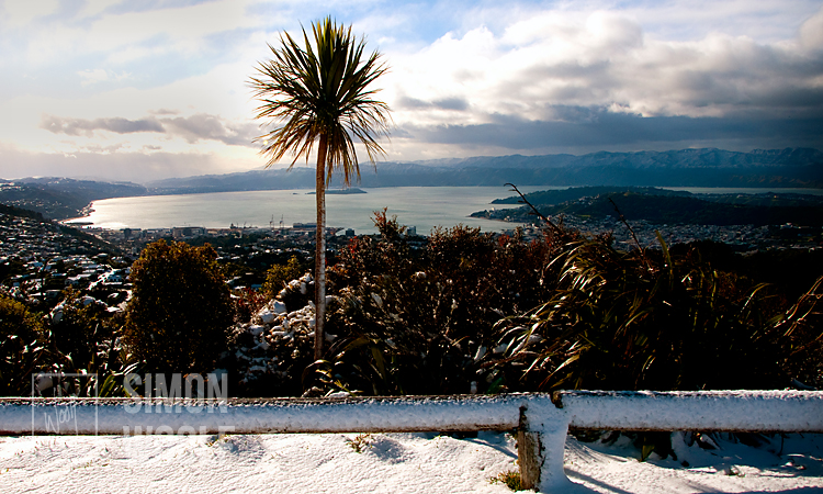 #2948-8470, Cabbage Tree and Snow