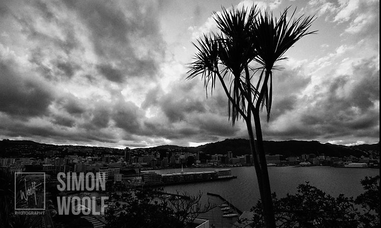 #3157, Cabbage Tree and City