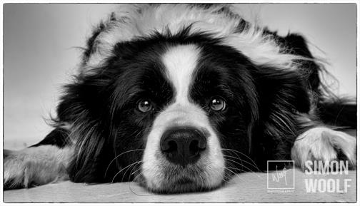 BW-dog lying down-studio-headshot-woolf-photography-oct15.jpg