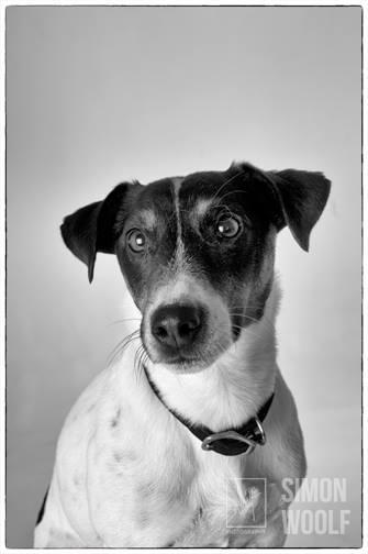 BW-dog sitting-headshot-studio-woolf-photography-oct15.jpg