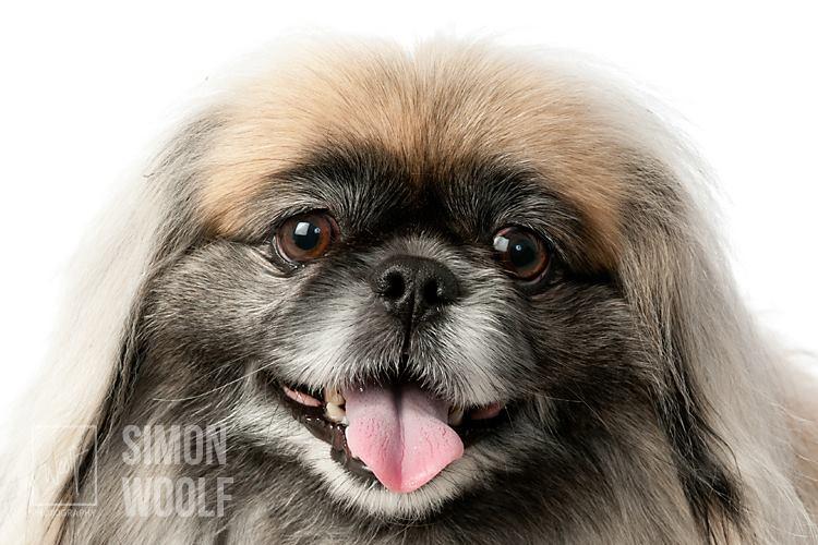 fluffy-dog-colour-studio-woolf-photography-2015.jpg