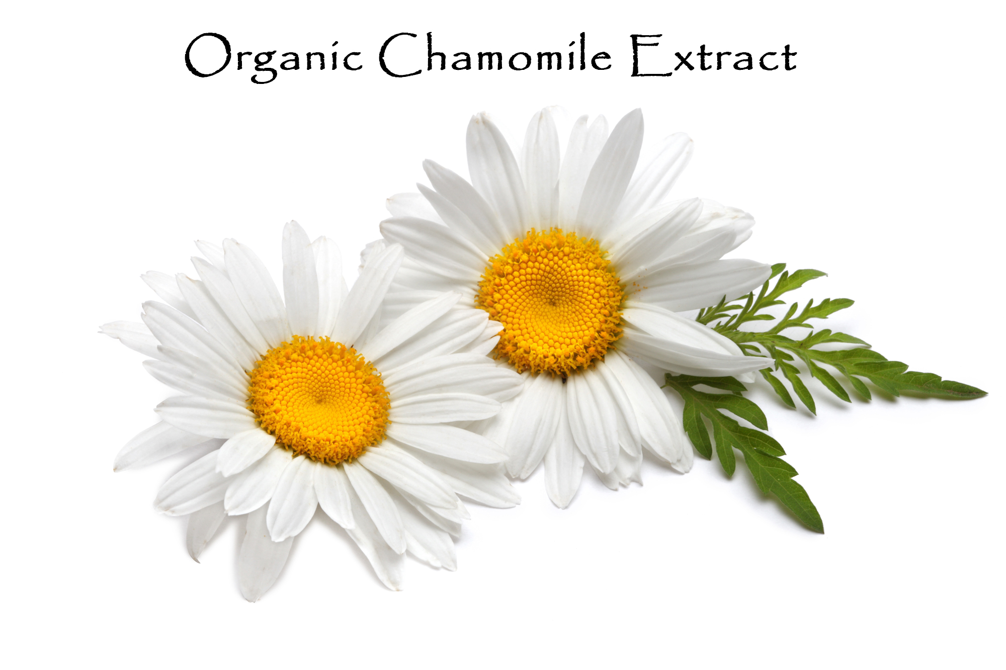 Used for thousands of year for its incredible health benefits recent and on-going research has identified chamomile's specific anti-inflammatory, anti-bacterial, muscle relaxant, antispasmodic, anti-allergenic and sedative properties, validating its long-held reputation.