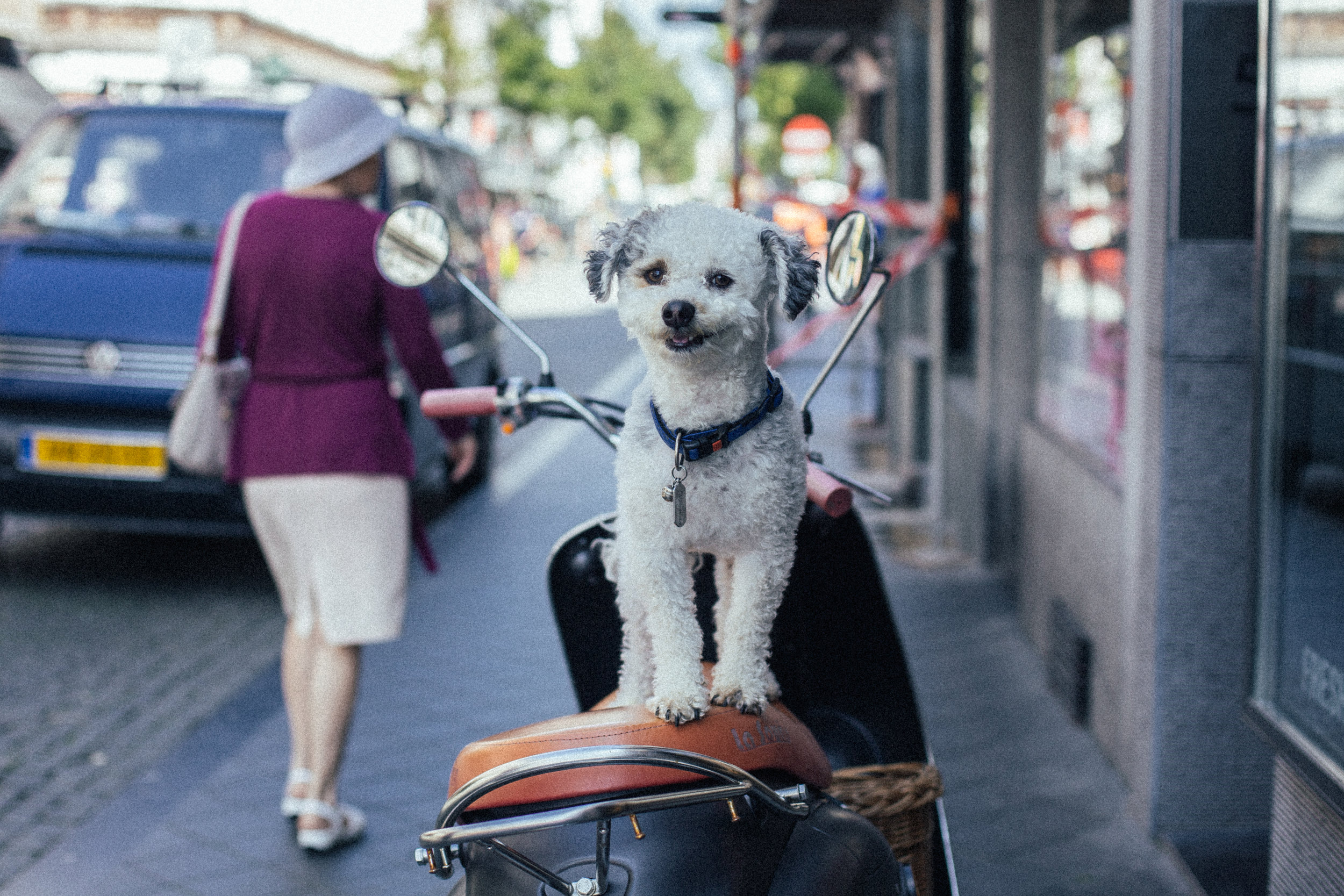 Puppy Love-New-4432.jpg