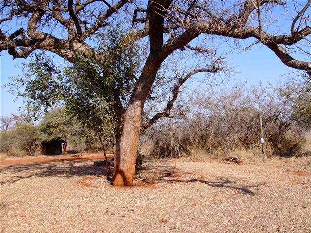 Ref: PT0013 | Your own piece of bushveld!    This 5 ha bushveld property is situated only 11 km west of Bela Bela, is undeveloped except for a smallthatched bathroom facility.Borehole water is available.   PRICE: R500 000