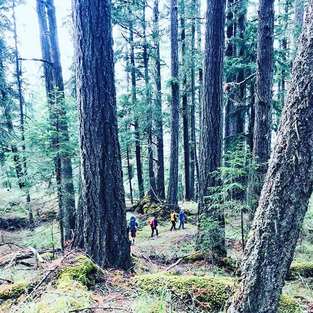 Hobbits standing amongst Giants #saltspringisland #vancouverisland #britishcolumbia #canada ❤️🇨🇦