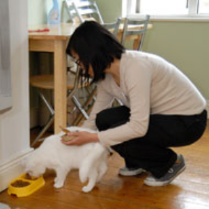 CatSitting_food.jpg