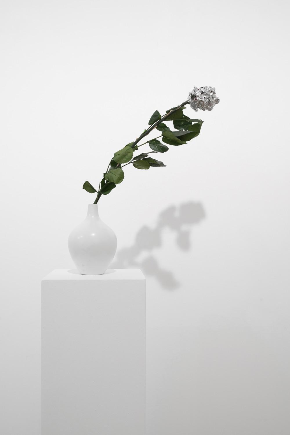 Rose éternelle, 2016