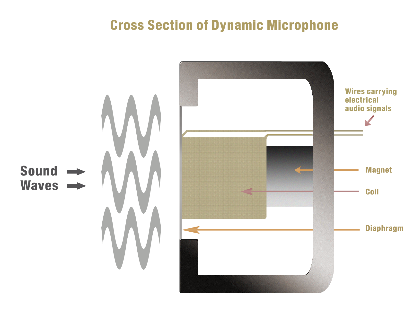 Cross section of dynamic microphone