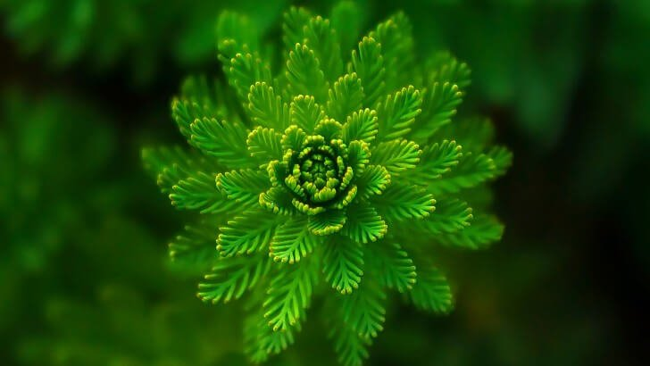 water-plant-close-up-979 (1).jpg