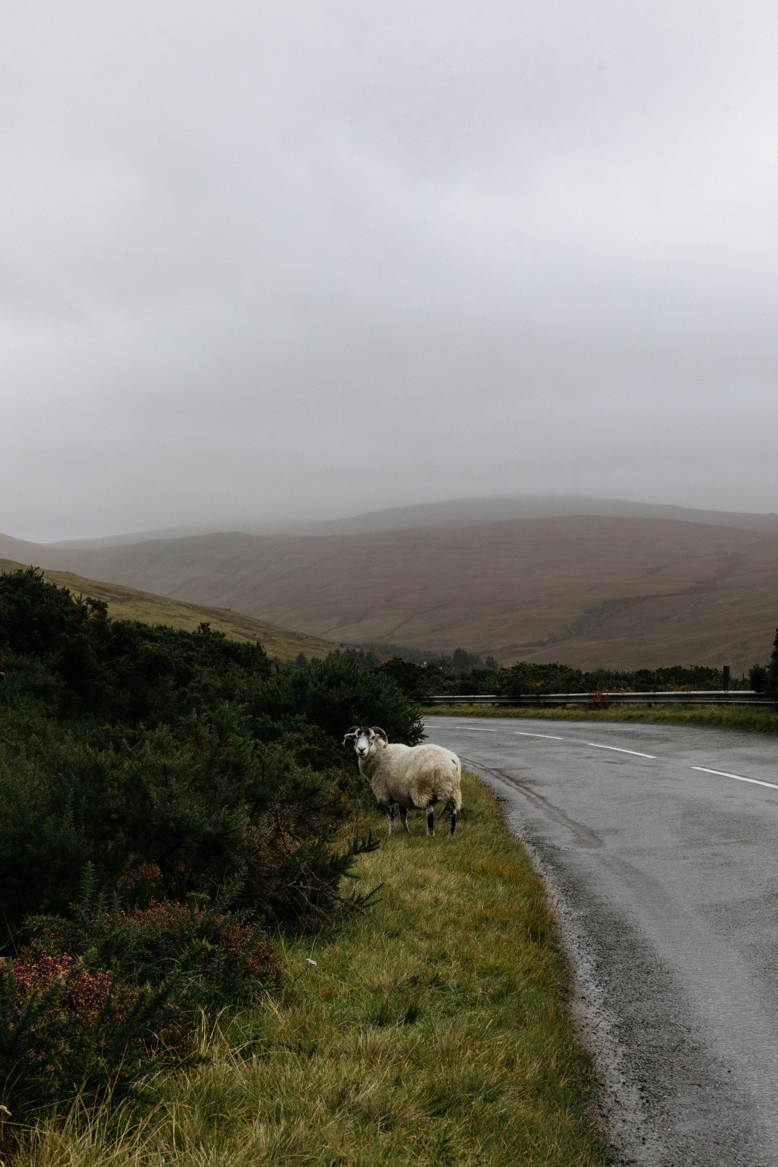 SaraFaraj_Scotland-0460.jpg