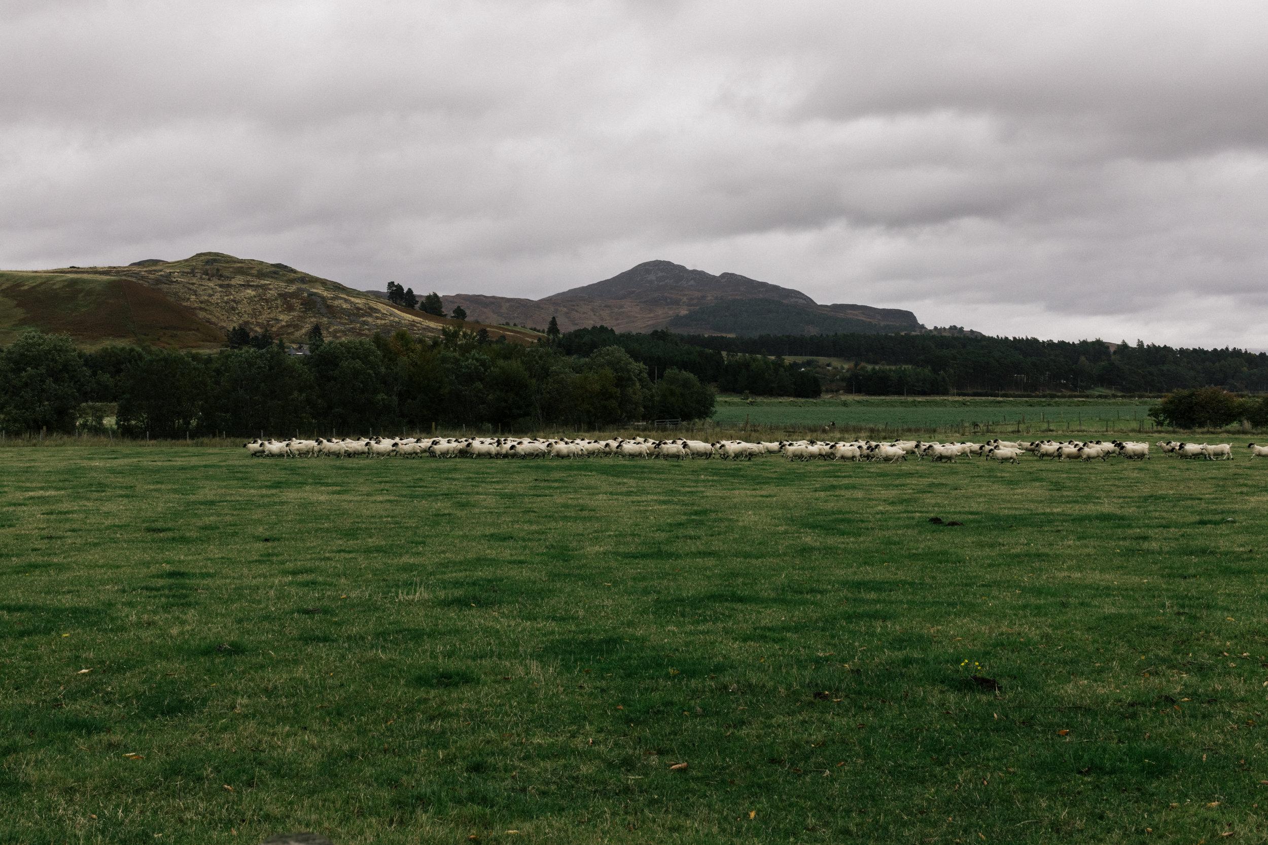 SaraFaraj_Scotland-1310.jpg