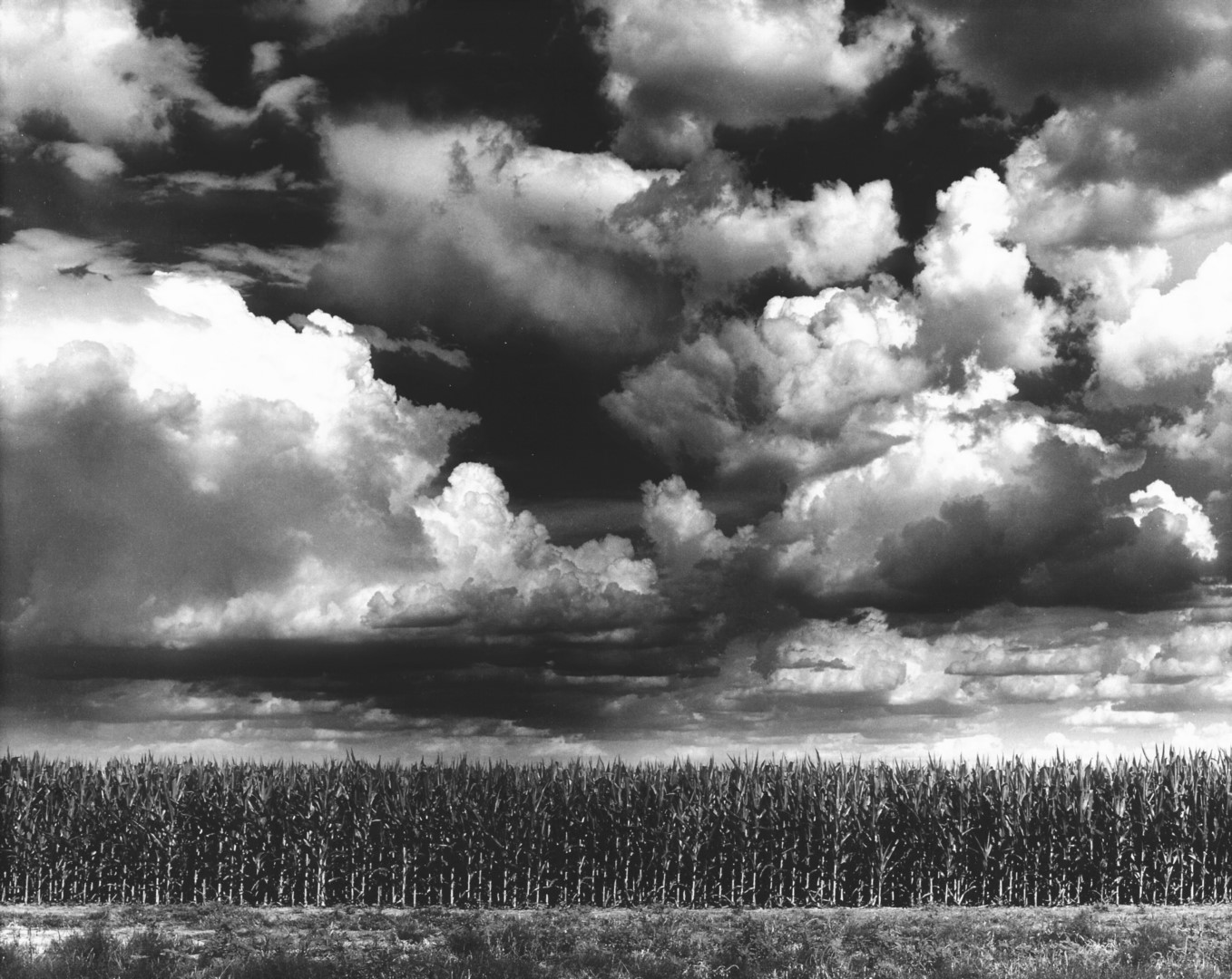 Corn Field and Clouds