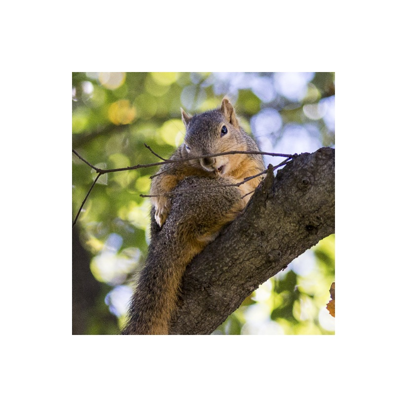 Squirrels13.jpg