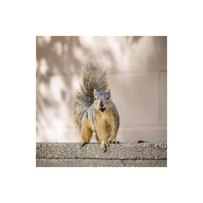 Squirrels15.jpg
