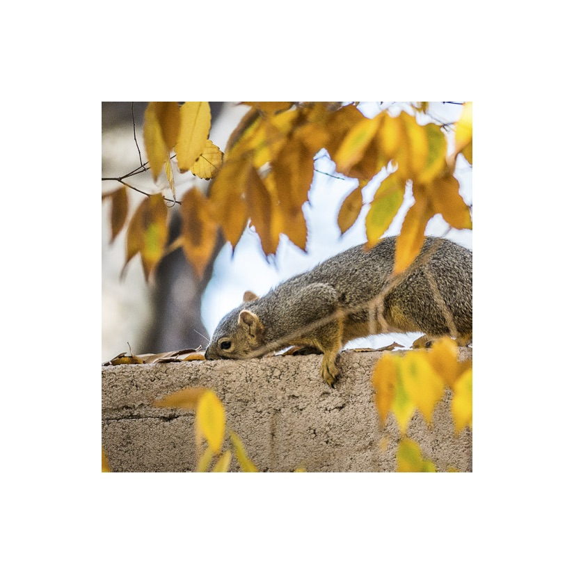 Squirrels19.jpg