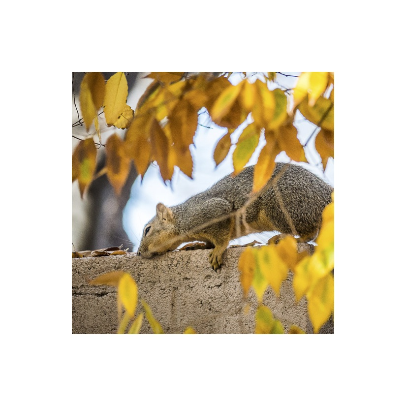 Squirrels20.jpg
