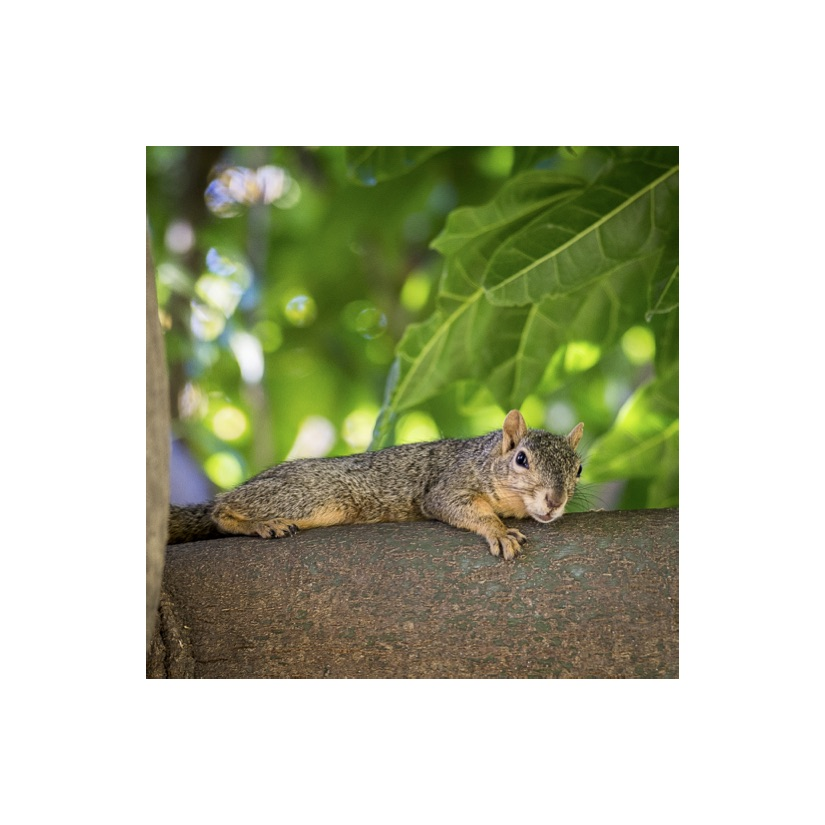 Squirrels23.jpg