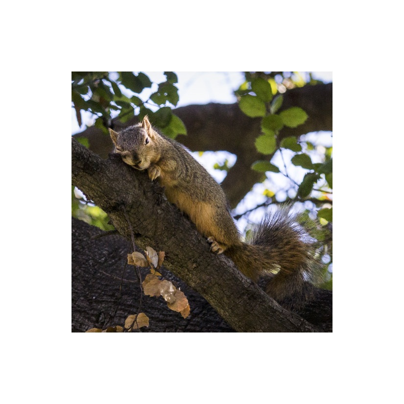 Squirrels33.jpg