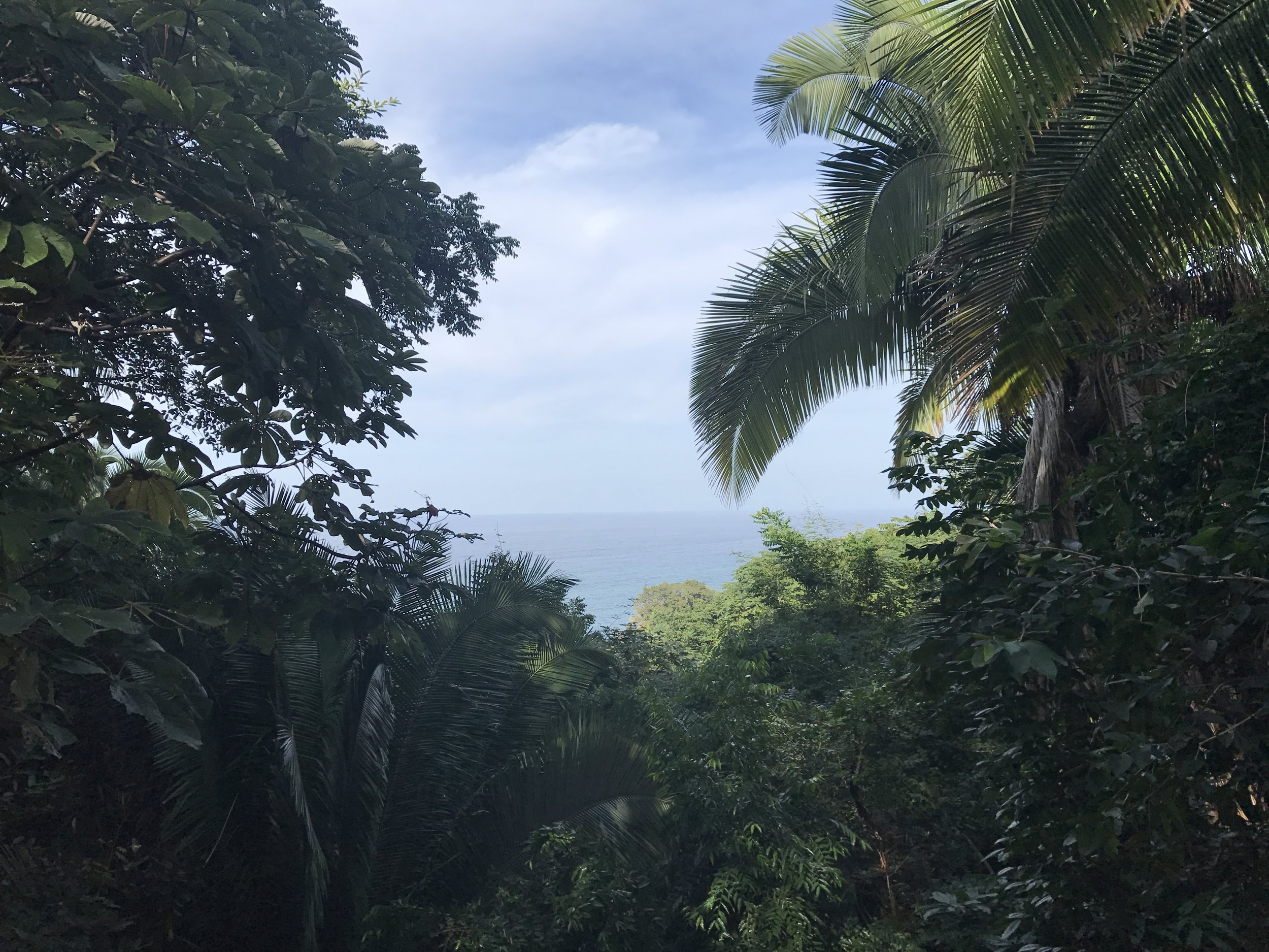 This is the view from our Casita at Tail Wind Jungle Lodge. The image below is a painting I started, inspired by this view.