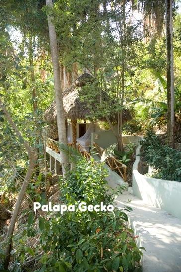 Palapa Gecko