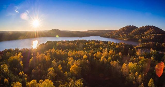 The birches are turning our landscapes into gold this year. #belgium #visitmaasmechelen #naturephotography #nature #connecterra #dji #djiinspire #inspirepro #visitlimburg #nationaalparkhogekempen #drone #dronephotography