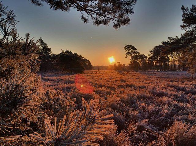 Winter has finaly come to Belgium. #visitmaasmechelen #ziepbeekvallei #nature #travelphotography #belgie #visitlimburg #nationaalparkhogekempen #naturephotography #hiking
