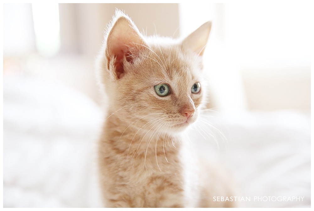 Sebastian_Photography_Pet_Pictures_Cat_Kitten_GreenEyes.jpg