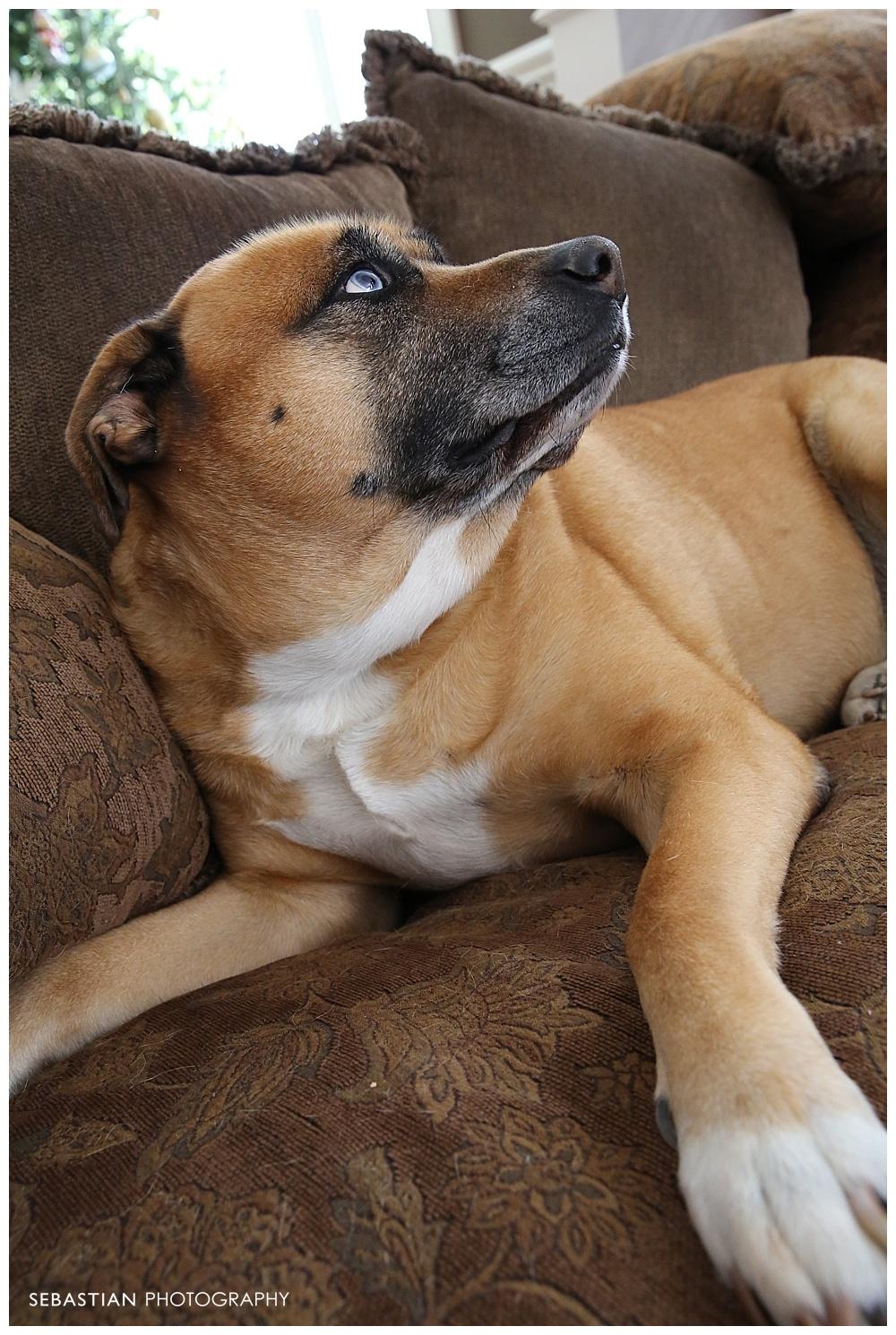 Sebastian_Photography_Pet_Pictures_Dog_Puppy_BlueEyes_Boxer.jpg