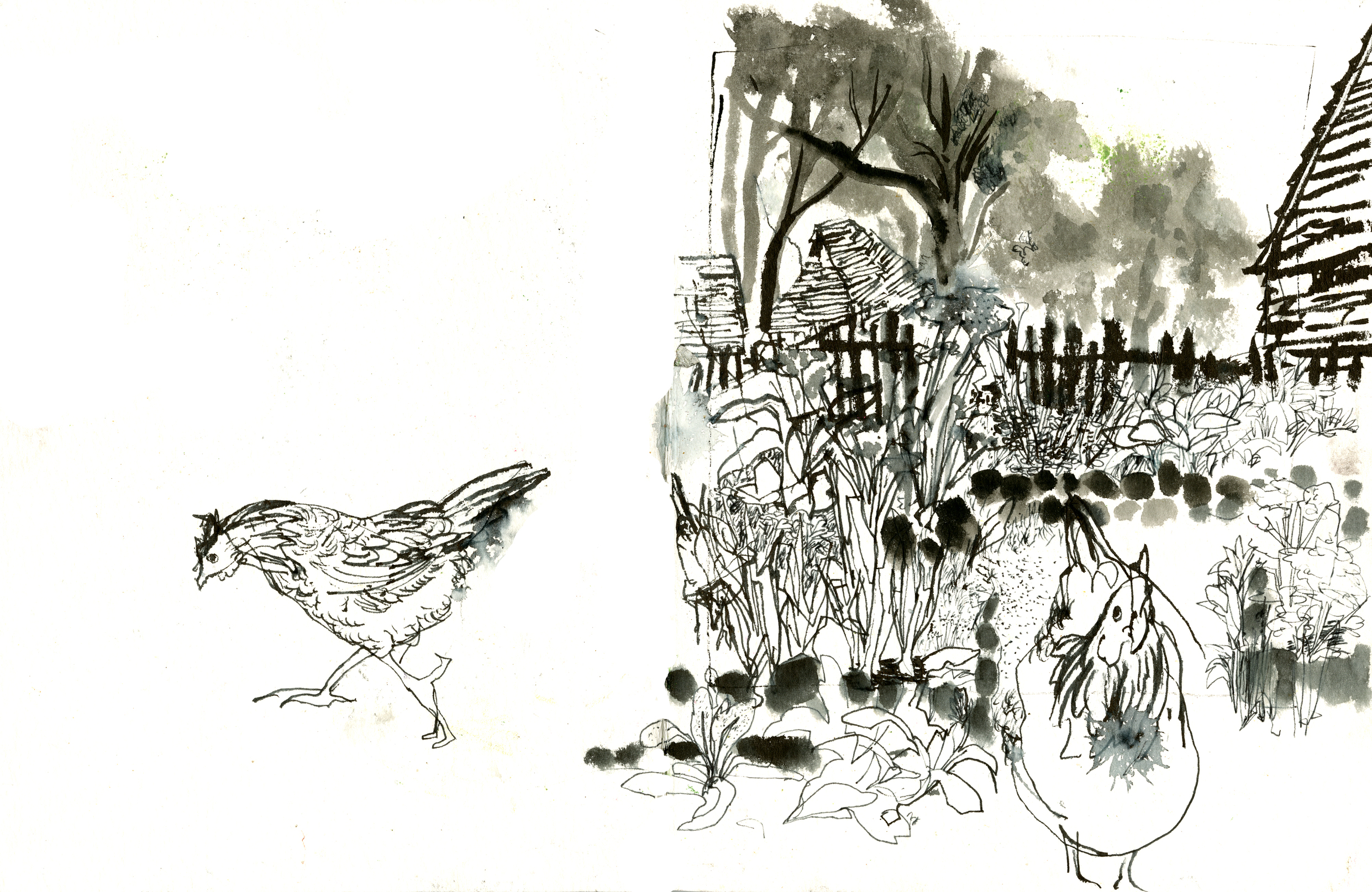 A Pilgrim garden, and a couple of Pilgrim chickens!