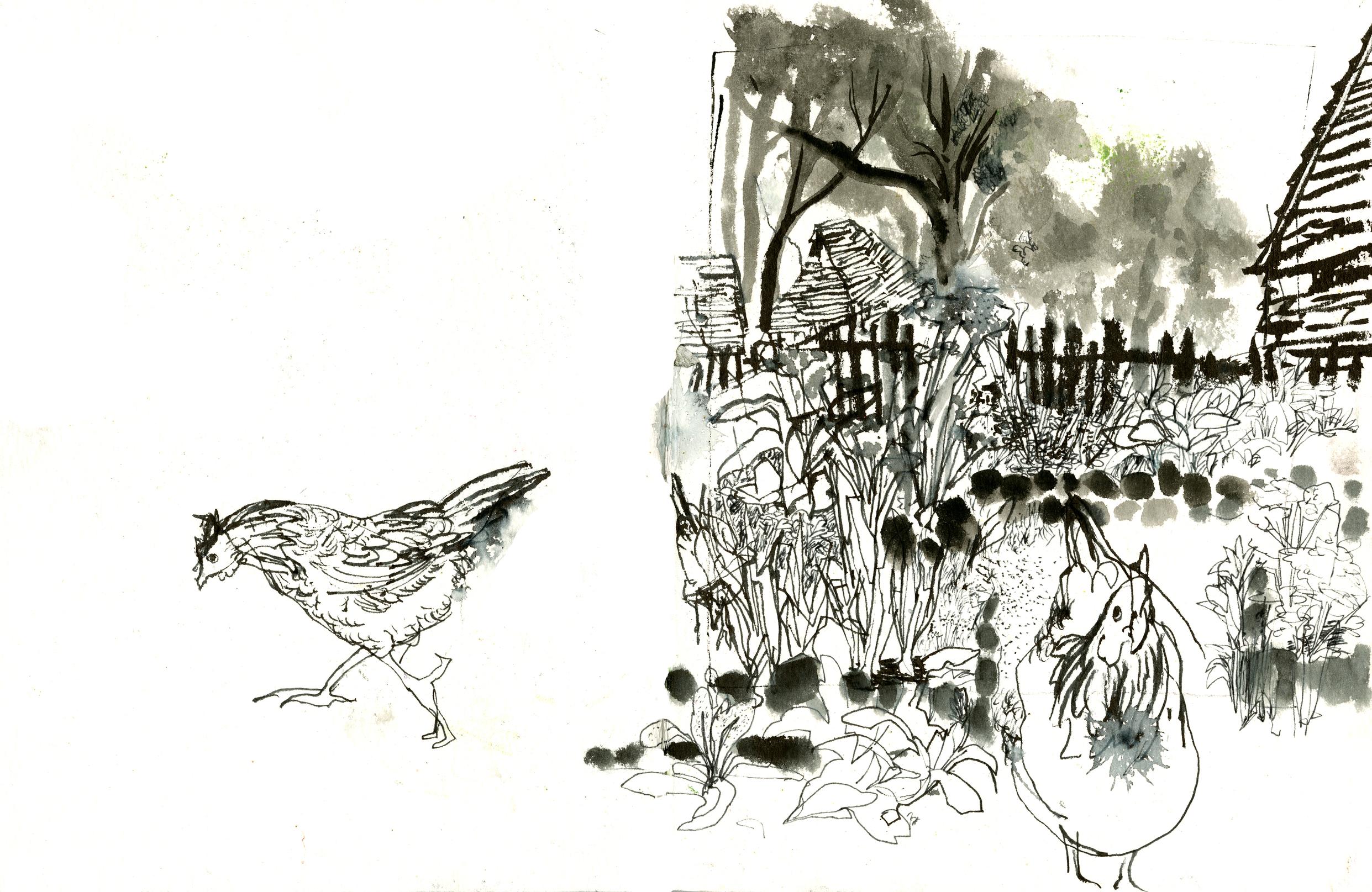 A Pilgrim garden, and a couple of Pilgrim chickens!