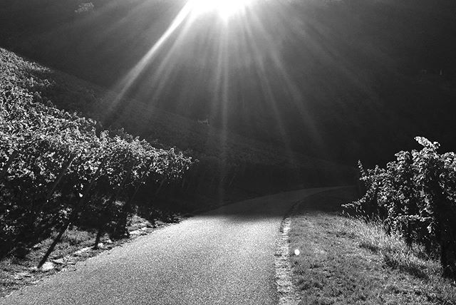 #bw #blackandwhite #blackandwhitephotography #nature #stuttgart #fotografiestuttgart #magic #schwarzweiss