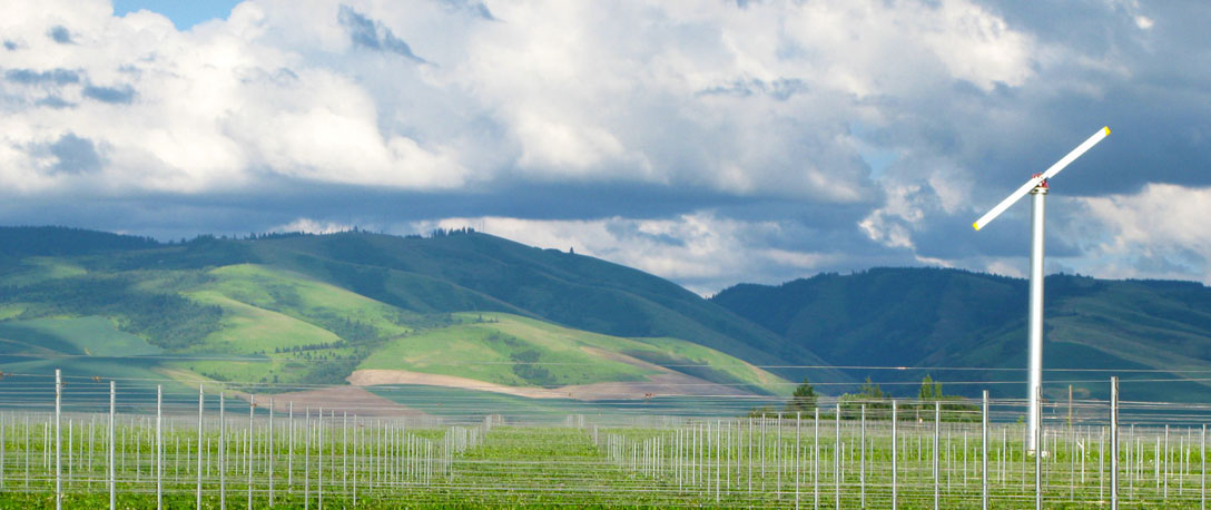 vineyard 6-12 center edited 1088 x 458.jpg