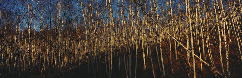 BirchTrees-Poster.jpg