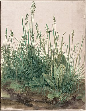 Albrecht Durer, A Large Piece Of Turf, 1503