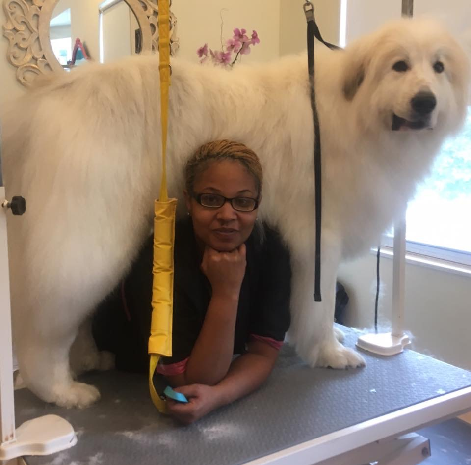 Tanisha with a canine friend while learning how to groom at the Grooming Project.