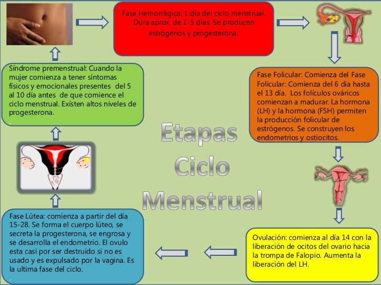 esquema de la menstruacion .jpg
