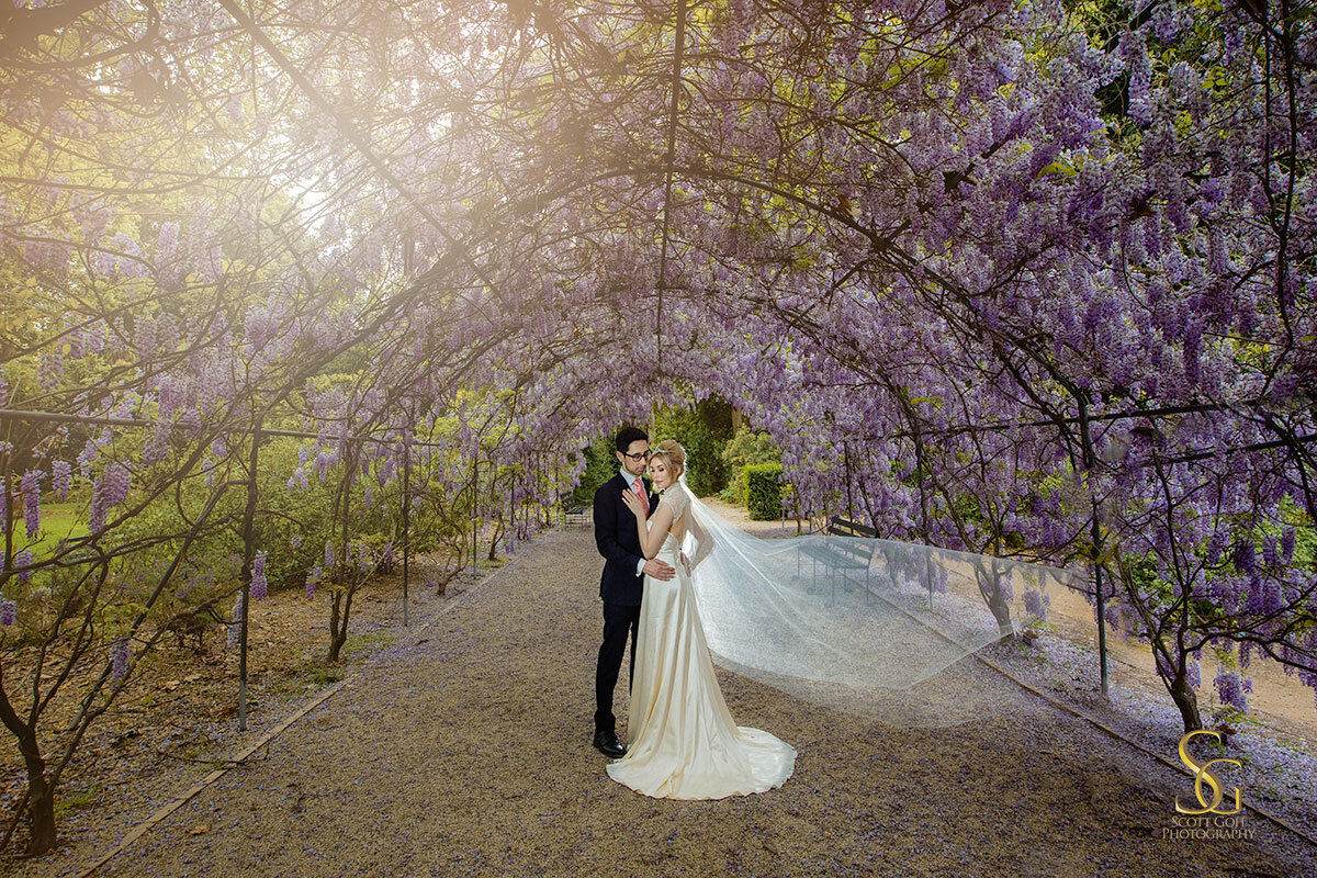 wisteria Adelaide wedding photo