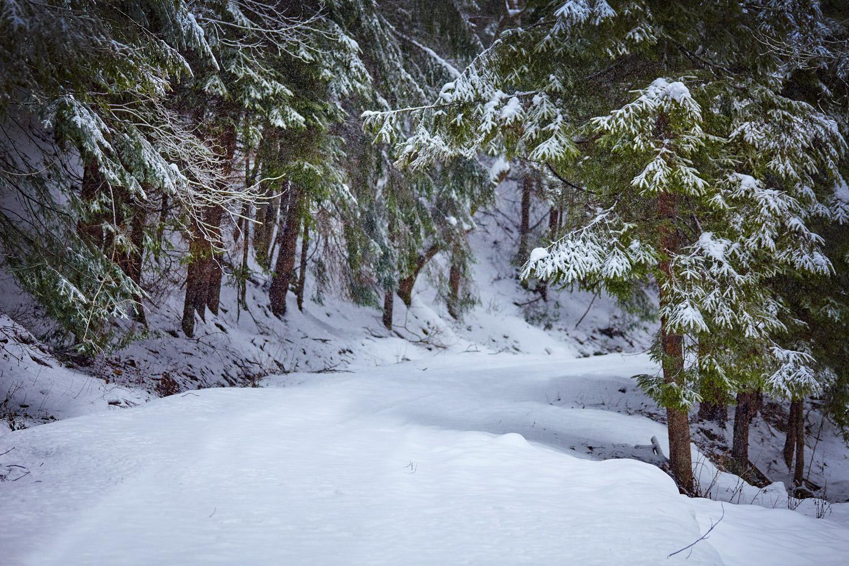 Scenic trails