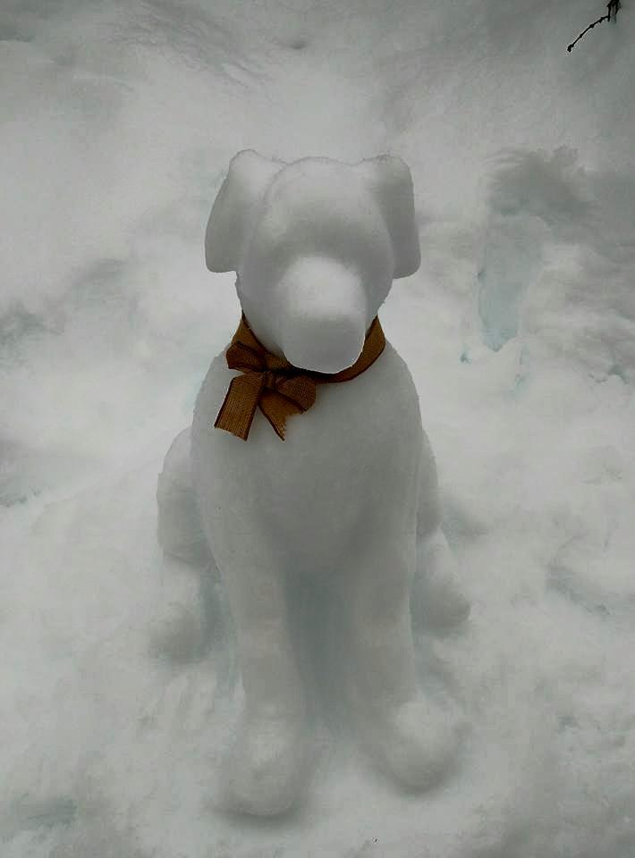 Millie snowdog!