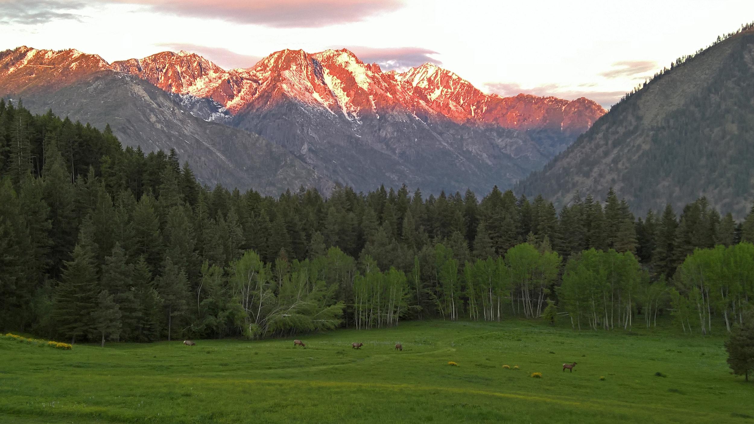 Mountain Home elk sunrise!