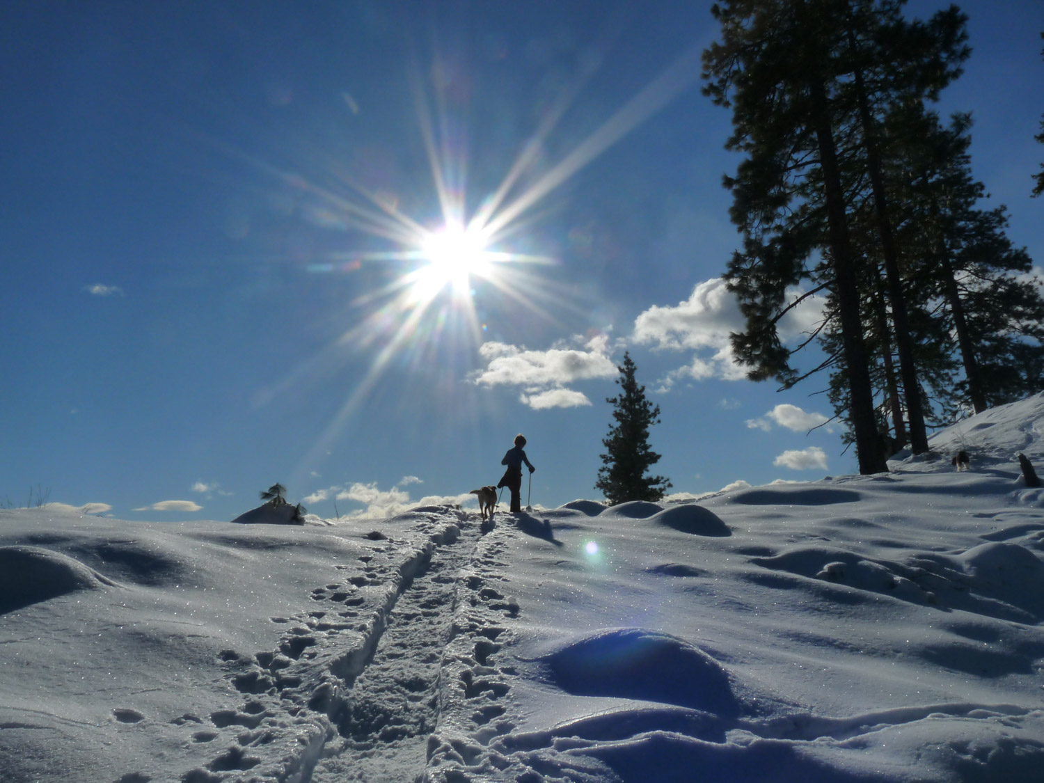 Millie...your snowshoe trail guide
