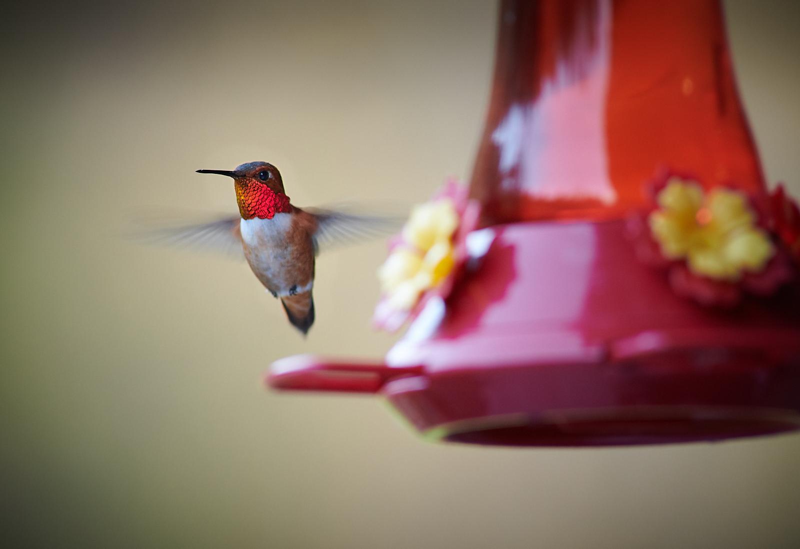 Hummingbirds Return