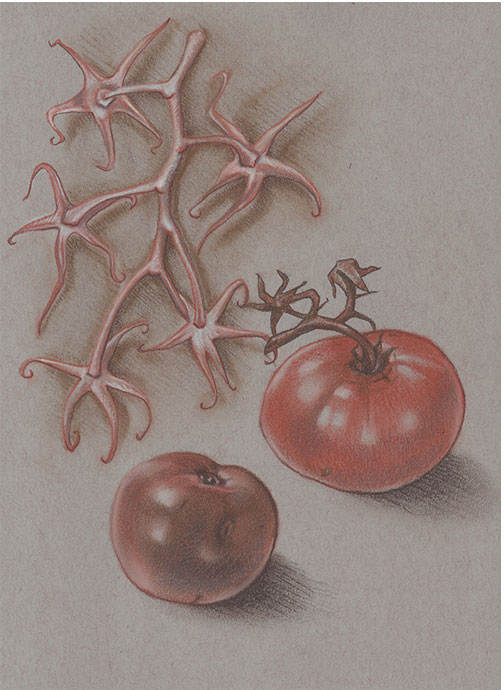 Late Tomatoes and Vine