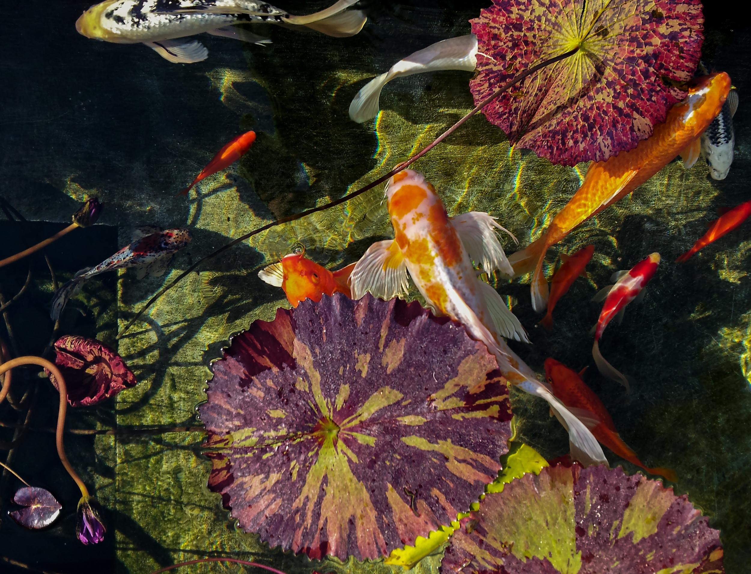 Fish02_24x18.jpg