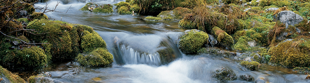 water-level-and-flow.jpg